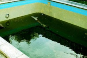 removing and preventing algae in swimming pools