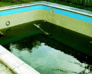 Remove and prevent swimming pool algae pool for thoughtpool for thought for Black spots in the swimming pool